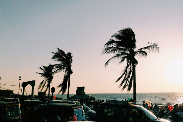 Tall palm trees sway in strong winds along the coastline