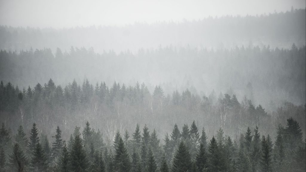 Vast forest masked by thick, white fog