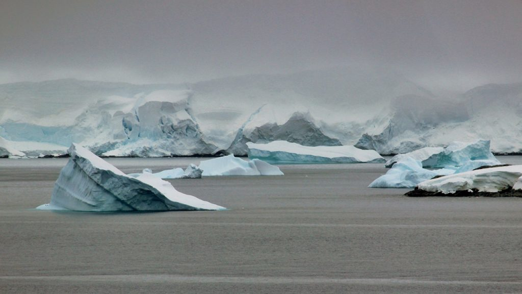 Light blue coloured icebergs sit in a grey sea in Antarctica